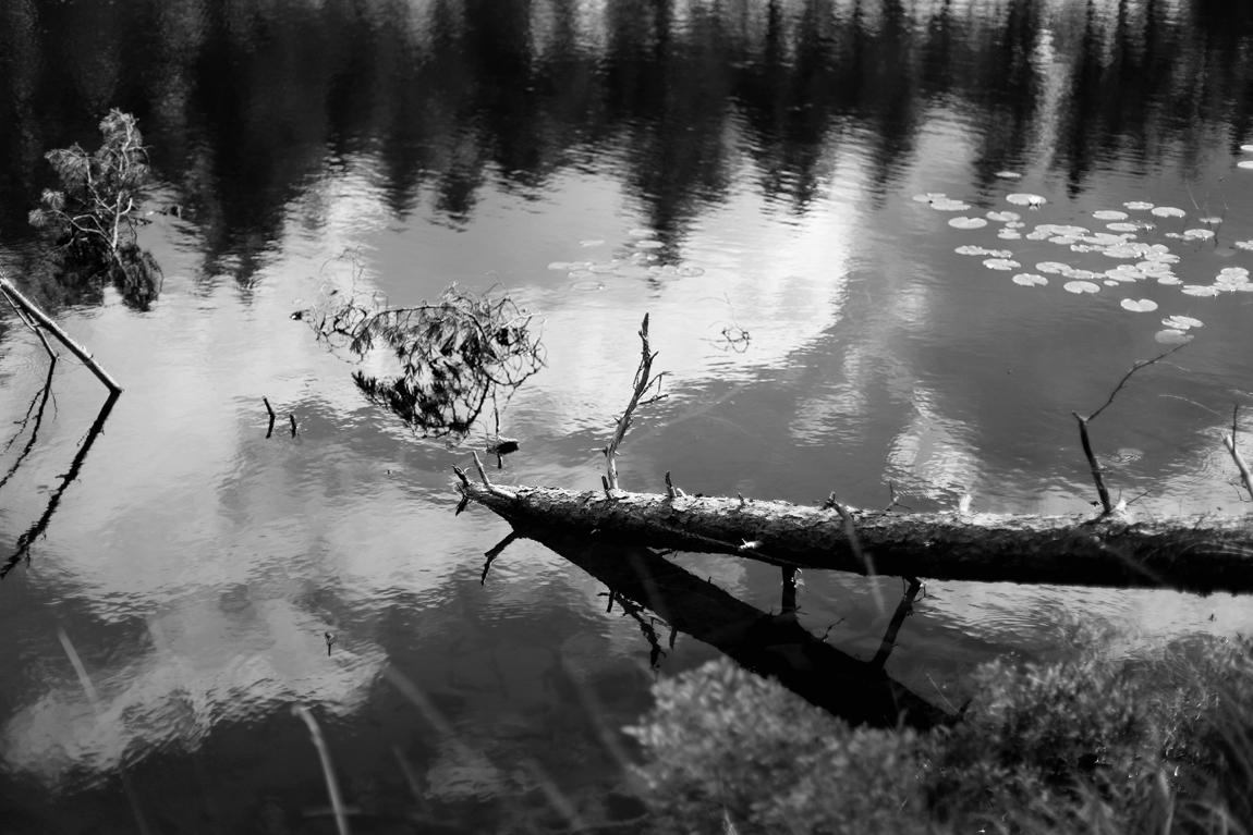 img_1990_edited-2sv